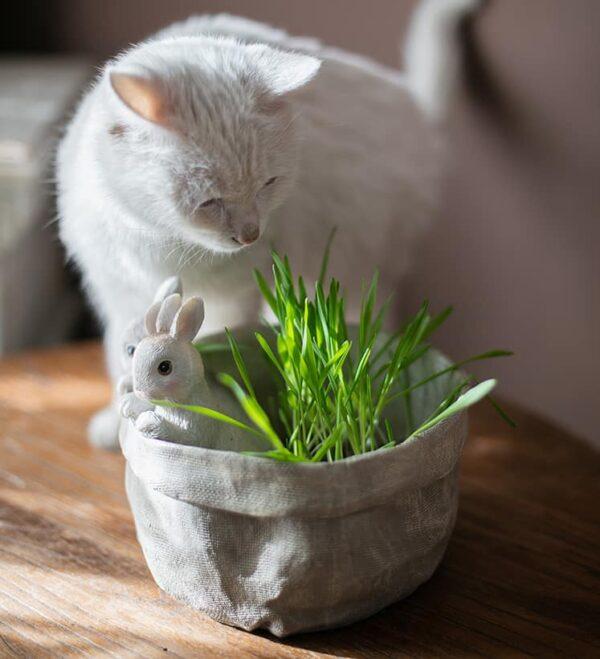 dekorativnyj czvetochnyj gorshok bunnies juhan 1