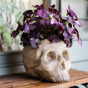 dekorativnyj czvetochnyj gorshok skull juhan 5